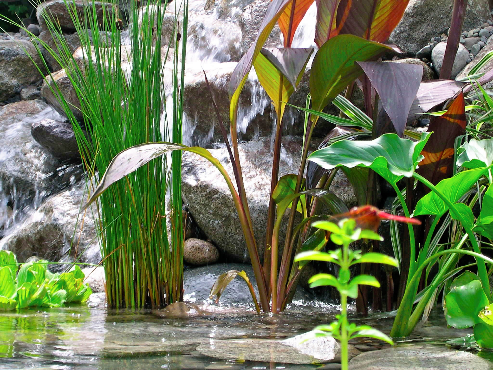 Is your pond eco friendly pondering with mark the pond guy for Pond with plants